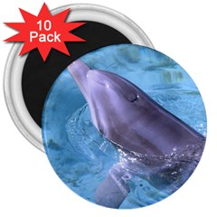 Dolphin 2 3  Magnets (10 Pack)  by trendistuff