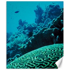Coral Reefs 2 Canvas 20  X 24   by trendistuff