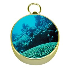 Coral Reefs 2 Gold Compasses by trendistuff