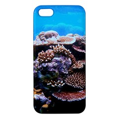 Coral Outcrop 2 Apple Iphone 5 Premium Hardshell Case by trendistuff