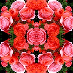 Beautiful Red Roses Magic Photo Cubes by Costasonlineshop