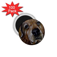 Selfie Of A Golden Retriever 1 75  Magnets (100 Pack)  by timelessartoncanvas