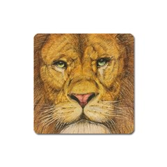 Regal Lion Drawing Square Magnet by KentChua
