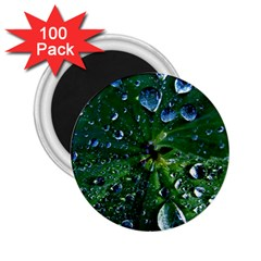 Morning Dew 2 25  Magnets (100 Pack)