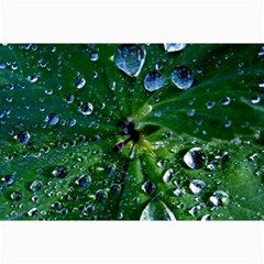 Morning Dew Collage 12  X 18  by Costasonlineshop