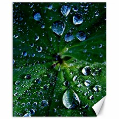 Morning Dew Canvas 16  X 20   by Costasonlineshop