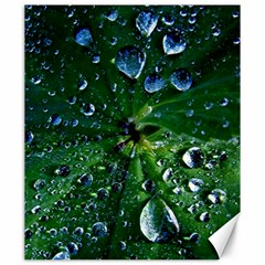 Morning Dew Canvas 20  X 24   by Costasonlineshop