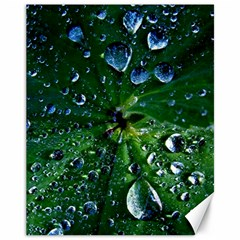 Morning Dew Canvas 11  X 14   by Costasonlineshop
