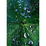 Morning Dew Apple 3D Greeting Card (7x5)  Inside