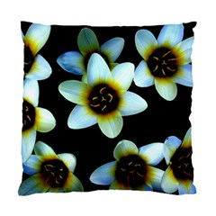 Light Blue Flowers On A Black Background Standard Cushion Case (one Side)  by Costasonlineshop