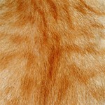 Orange Fur 2 YOU ARE INVITED 3D Greeting Card (8x4)  Inside