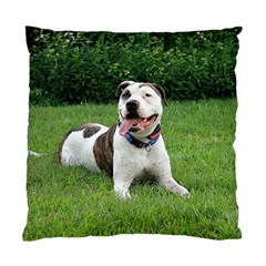 Pit Bull T Bone Standard Cushion Case (two Sides) by ButThePitBull