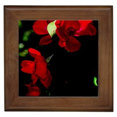 Roses 4 Framed Tiles by timelessartoncanvas