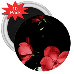 Mauve Roses 3 3  Magnets (10 Pack)