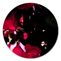 Pink Roses Magnet 5  (round) by timelessartoncanvas
