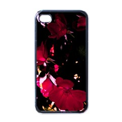 Pink Roses Apple Iphone 4 Case (black) by timelessartoncanvas