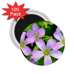 Little Purple Flowers 2 2 25  Magnets (100 Pack)  by timelessartoncanvas