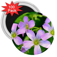 Little Purple Flowers 2 3  Magnets (100 Pack) by timelessartoncanvas