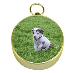 Pit Bull T Bone Puppy Gold Compasses by ButThePitBull