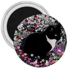 Freckles In Flowers Ii, Black White Tux Cat 3  Magnets by DianeClancy