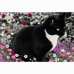 Freckles In Flowers Ii, Black White Tux Cat Collage 12  X 18  by DianeClancy