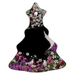 Freckles In Flowers Ii, Black White Tux Cat Ornament (christmas Tree) by DianeClancy
