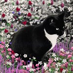 Freckles In Flowers Ii, Black White Tux Cat Happy Birthday 3D Greeting Card (8x4)  Inside