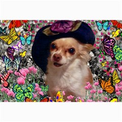 Chi Chi In Butterflies, Chihuahua Dog In Cute Hat Collage Prints by DianeClancy