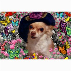 Chi Chi In Butterflies, Chihuahua Dog In Cute Hat Canvas 12  X 18