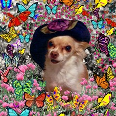 Chi Chi In Butterflies, Chihuahua Dog In Cute Hat Magic Photo Cubes by DianeClancy