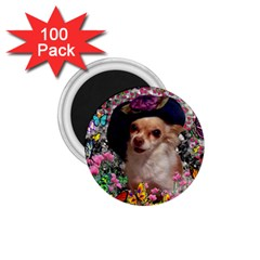 Chi Chi In Butterflies, Chihuahua Dog In Cute Hat 1 75  Magnets (100 Pack)  by DianeClancy