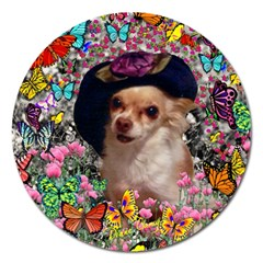 Chi Chi In Butterflies, Chihuahua Dog In Cute Hat Magnet 5  (round) by DianeClancy