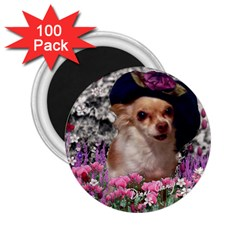 Chi Chi In Flowers, Chihuahua Puppy In Cute Hat 2 25  Magnets (100 Pack)  by DianeClancy
