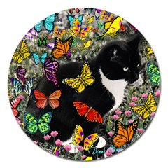 Freckles In Butterflies I, Black White Tux Cat Magnet 5  (round) by DianeClancy