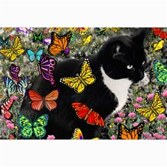 Freckles In Butterflies I, Black White Tux Cat Collage Prints by DianeClancy