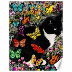 Freckles In Butterflies I, Black White Tux Cat Canvas 12  X 16   by DianeClancy