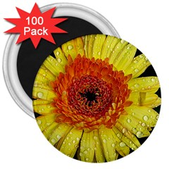 Yellow Flower Close Up 3  Magnets (100 Pack) by MichaelMoriartyPhotography
