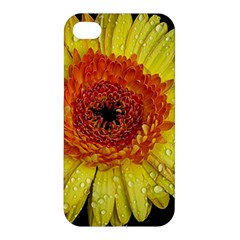 Yellow Flower Close Up Apple Iphone 4/4s Premium Hardshell Case by MichaelMoriartyPhotography