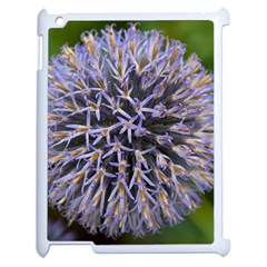 Globe Mallow Flower Apple Ipad 2 Case (white) by MichaelMoriartyPhotography