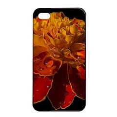 Marigold On Black Apple Iphone 4/4s Seamless Case (black) by MichaelMoriartyPhotography