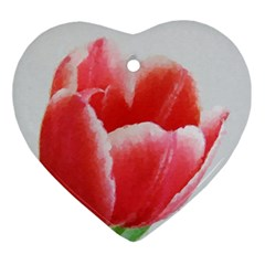 Tulip Red Watercolor Painting Ornament (heart)  by picsaspassion