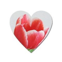 Tulip Red Watercolor Painting Heart Magnet by picsaspassion