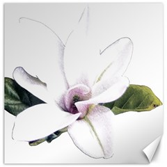 White Magnolia Pencil Drawing Art Canvas 12  X 12   by picsaspassion
