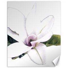 White Magnolia Pencil Drawing Art Canvas 11  X 14   by picsaspassion