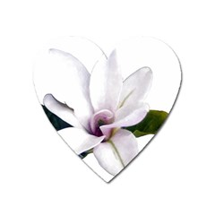 Magnolia Wit Aquarel Painting Art Heart Magnet by picsaspassion