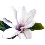 Magnolia Wit Aquarel painting art HOPE 3D Greeting Card (7x5) Back