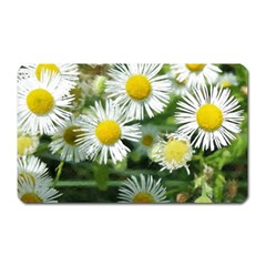 White Summer Flowers Watercolor Painting Art Magnet (rectangular) by picsaspassion