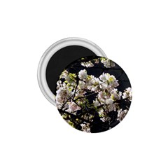 Japanese Cherry Blossom 1 75  Magnets by picsaspassion