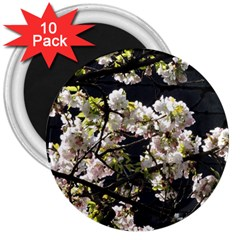 Japanese Cherry Blossom 3  Magnets (10 Pack)  by picsaspassion