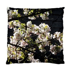 Japanese Cherry Blossom Standard Cushion Case (two Sides) by picsaspassion